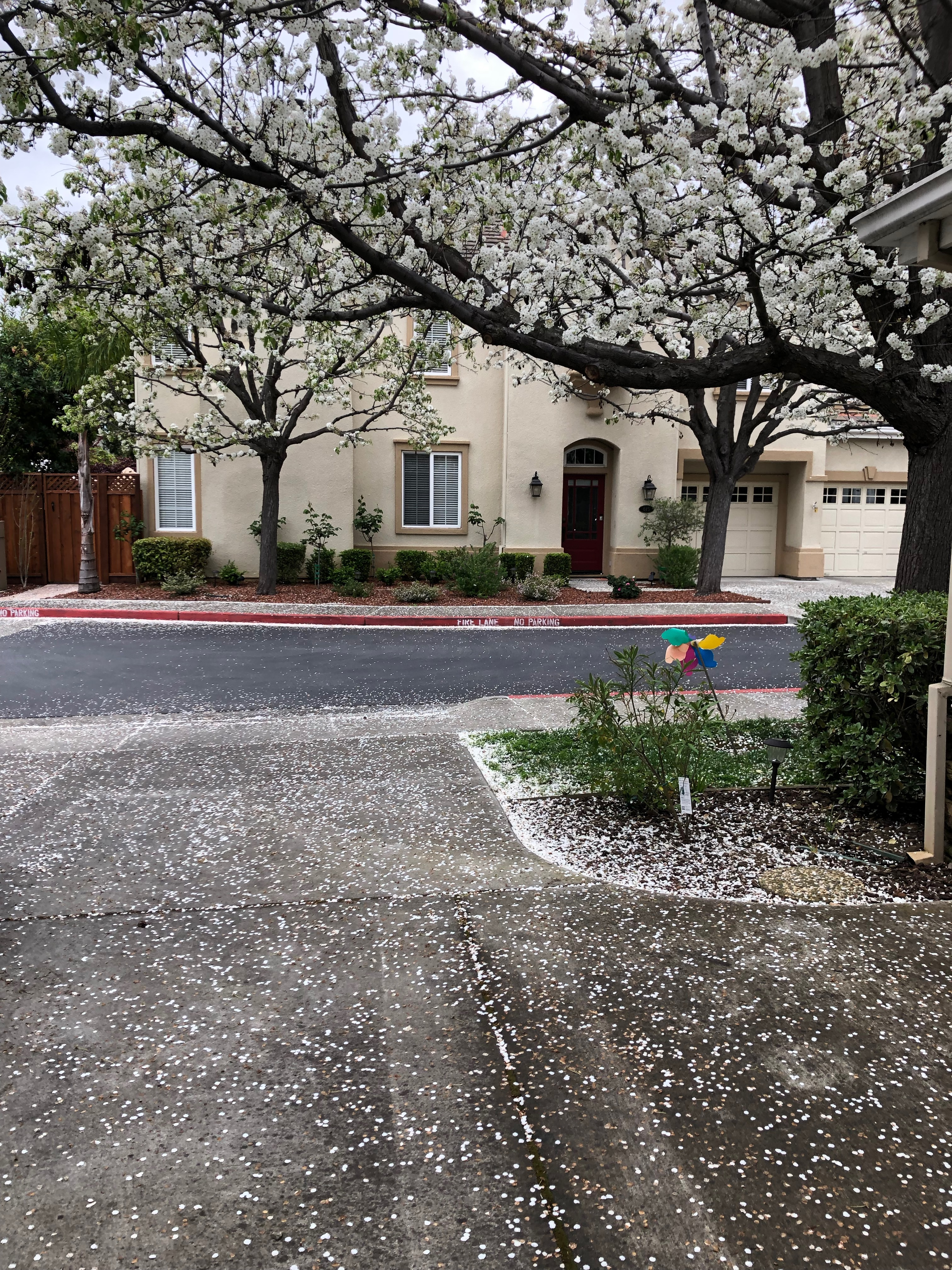 Spring blossom, looking a lot like snow!